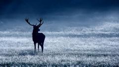 Deer Desktop Wallpaper 16668