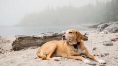 Dog Resting Wallpaper HD 42204