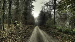 Fantastic Forest Road Wallpaper 36161