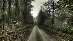 Fantastic Forest Road Wallpaper 36161