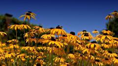 Flower Landscape Wallpaper 29019