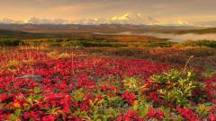 Flower Landscape Wallpaper 29022
