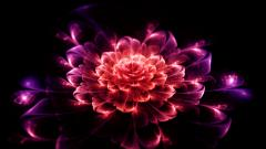 Flowers Digital Art 22464