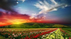 Flowers Landscape 29015