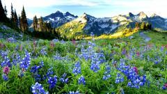 Flowers Landscape 29023