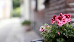 Flowers Street Wallpaper 44579