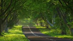 Forest Road Background 36158