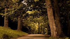 Forest Road Wallpaper 36139