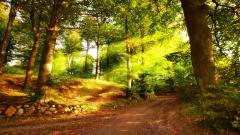 Forest Road Wallpaper 36167