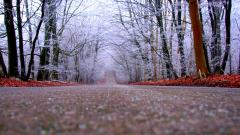 Forest Road Wallpaper 36170