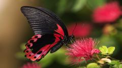 Free Butterfly Wallpaper 21792