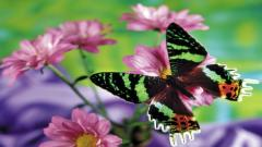 Free Butterfly Wallpaper 21793
