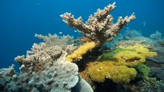 Free Coral Reef Wallpaper 25136