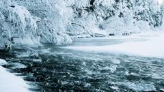 Free Frozen Forest Wallpaper 34214