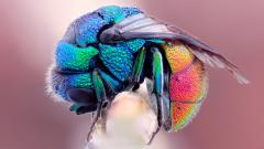 Free Insect Wallpaper 24735