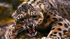 Free Jaguar Wallpaper 26085