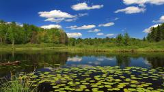 Free Pond Wallpaper 29685