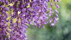 Free Purple Macro Pictures 38015