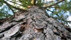 Free Tree Bark Wallpaper 26072