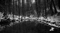 Frozen Forest 34211