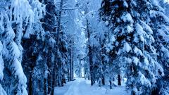 Frozen Forest 34215