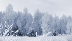 Frozen Forest 34225