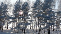 Frozen Forest Wallpaper 34208