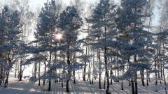Frozen Forest Wallpaper 34208