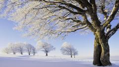 Frozen Trees Wallpaper 34219