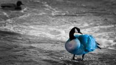 Goose Background 33253