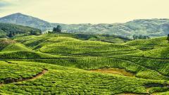 India Landscape 26757