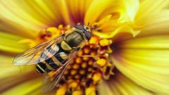 Insects 24762