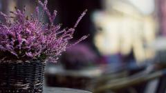 Lavender Background 21786
