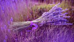 Lavender Wallpaper 21772