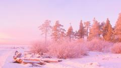Light Pink Nature Wallpaper 24302