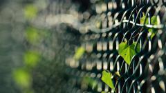 Lovely Fence Wallpaper 44950