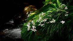 Lovely Moss Wallpaper 38574