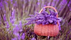 Lovely Purple Macro Wallpaper 37995