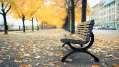 Montreal Park Bench Wallpaper 44607