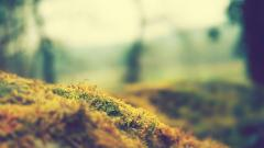 Moss Wallpaper 38582