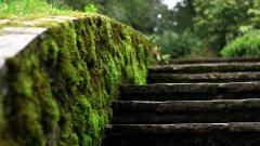 Moss Wallpaper 38584
