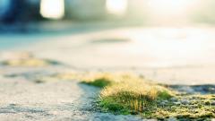 Moss Wallpaper 38585
