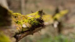 Moss Wallpaper HD 38587