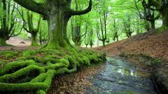 Moss Wallpapers 38573
