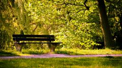 Nature Bench Wallpaper 44617
