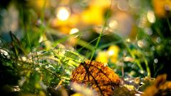 Nature Macro Wallpaper 44113