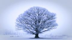 Oak Tree 32977