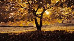 Oak Trees 32978