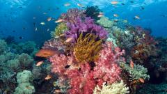 Ocean Life Desktop Wallpaper 30940