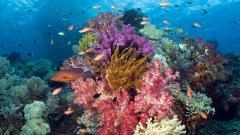 Ocean Life Desktop Wallpaper 30940